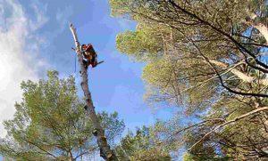 l'artborist'grimpeur arboriste élagueur bouche du rhone 500-min